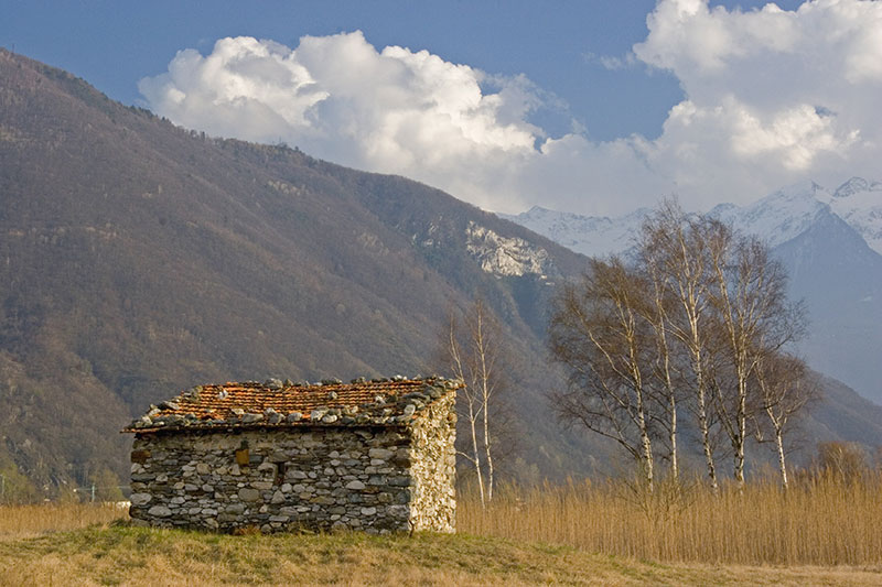 A-woods-in-the-natural-reserve-of-Pian-of-Spagna-and-lake-Mezzola-Lombardy-Italy
